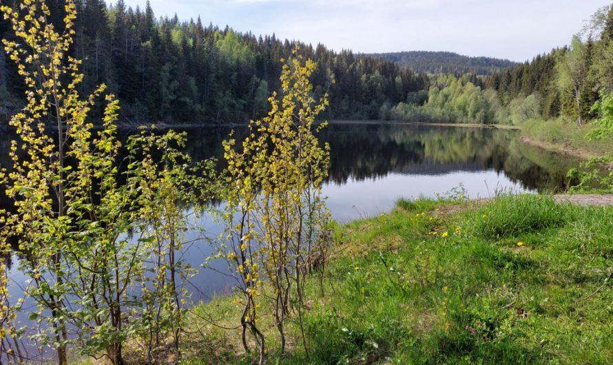 Søndre og nordre Movatn (Movann)