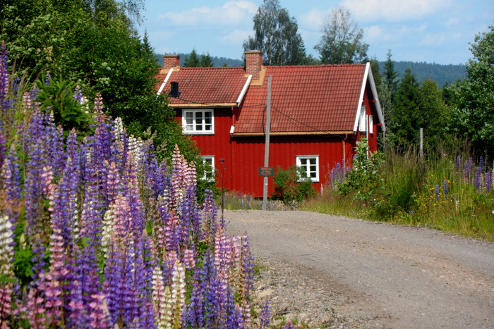 Plassen Bakken i Nordmarka