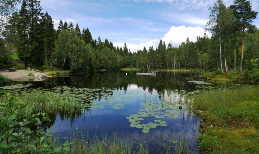 Svarttjern på Holum skog / Skillebekk