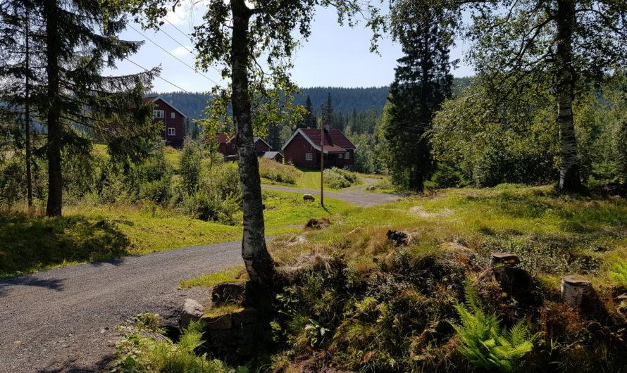 Katnosa i Nordmarka